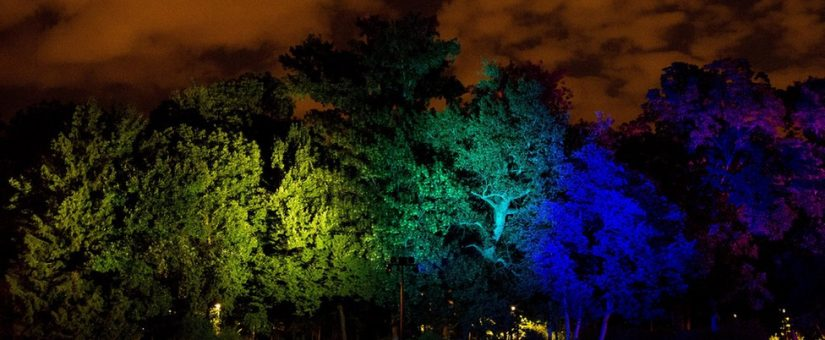 Varázslatos fényjáték a lombkoronák közt, Budapest első fénykertje